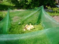 Elkerítő háló